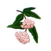 Rožmedžių eterinis aliejus (Aniba rosaeodora) 5/10ml