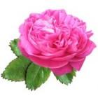 Rožių hidrolatas 1l