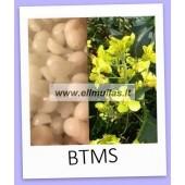 Kondicionuojantis emulsiklis BTMS 25/50g