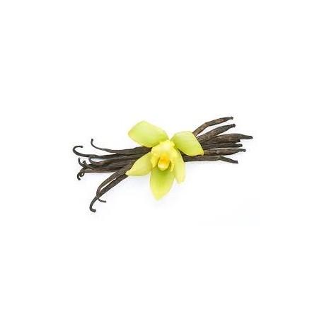 Vanilės absoliutas (Vanilla planifolia) 5ml