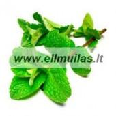 Pipirmėčių eterinis aliejus (Mentha arvensis) 5/10ml
