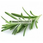 Rozmarinų eterinis aliejus (Rosmarinus Officinalis) 5/10ml