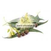 Eukalipto eterinis aliejus (Eucalyptus Globulus) 10ml