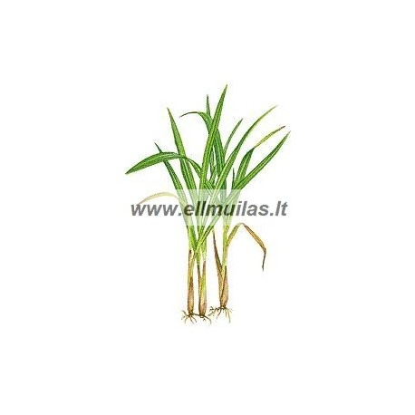 Citrinžolių eterinis aliejus (Cymbopogon flexuosus) 10 ml