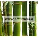 Bambuko  kvapusis aliejus 10/30ml
