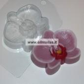 Muilo forma ''Gėlė orchidėja''