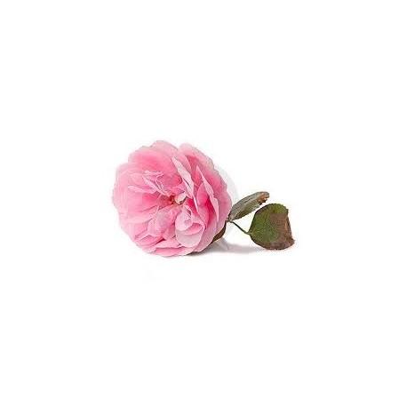 Damaskinių rožių milteliai 10g