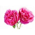 Rožių vaškas 10g