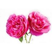 Rožių vaškas 5g