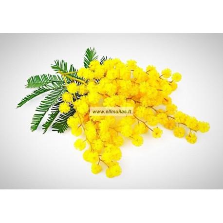 Mimozų vaškas 10g