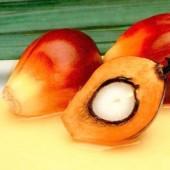 Palmių ekologiškas sviestas