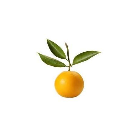 Bergamočių eterinis aliejus (Citrus Bergamia) 5/10ml
