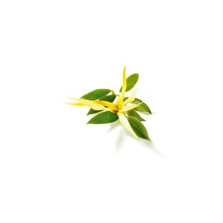 Kanangų (Ylang Ylang) eterinis aliejus (Canaga odorata) 5/10ml