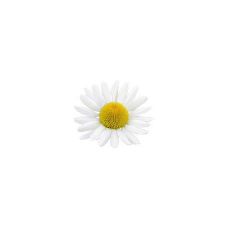 Ramunėlių romaniškų eterinis aliejus (Anthemis nobilis) 2/5ml