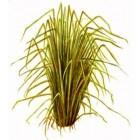 Vetiverijų eterinis aliejus (Vetiveria zizanoides) 5ml