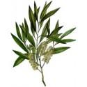 Arbatmedžių eterinis aliejus (Melaleuca Alternifolia) 5/10ml