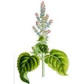 Muskatinių šalavijų eterinis aliejus (Salvia sclarea ) 5/10ml