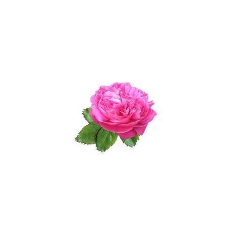 Rožių hidrolatas 50/100ml