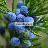 Kadagių uogų eterinis aliejus (Juniperus communis) 5/10ml